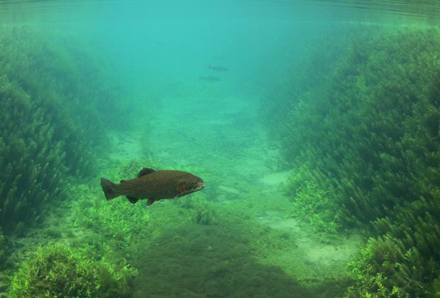 La Combe Des Eaux Bleues - Pêche à la Mouche en Haute-Marne Écot-La-Combe - Flyfishing Week-end - Réservation